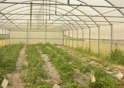 Una serra dell'Istituto agrario